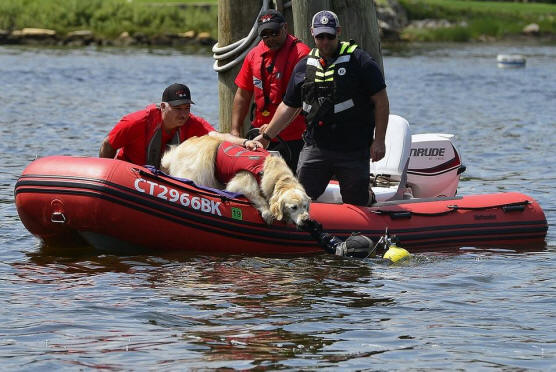 Knox, a five year old golden retriever, is held by his owner Bob Paruolo, both of Glastonbury, as he greets a diver with the Woodstock Dive Team as CT Canine Search and Rescue performs search and rescue demonstrations on Sunday, August 5, 2018 at the Mystic Seaport. (Sarah Gordon/The Day)